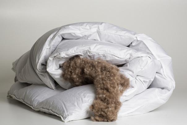 Одеялу тоже нужен уход! Рассказываем, как правильно ухаживать за одеялом, изображение №5