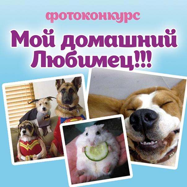 конкурс фотографий домашних животных результате туя