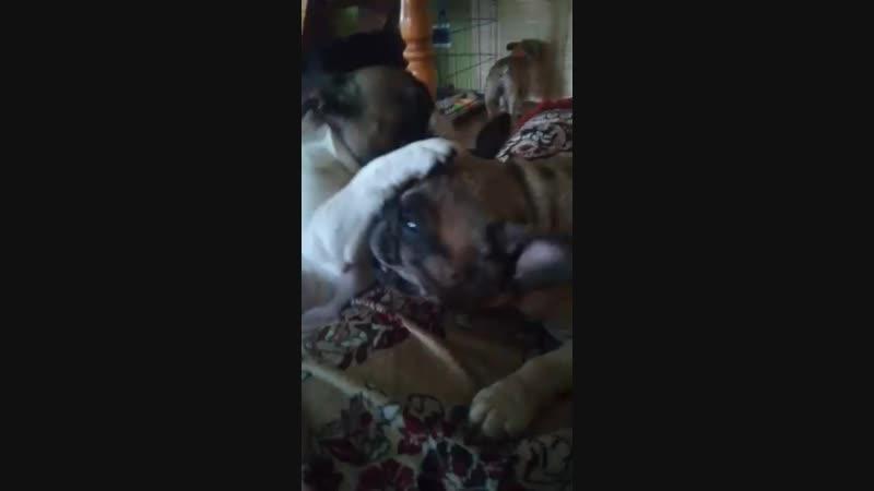 Видео от Татьяны Тепловой