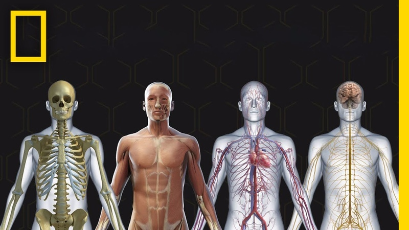 Human Body 101 National Geographic
