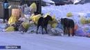 Морозы внесли коррективы в работу мусоровозов
