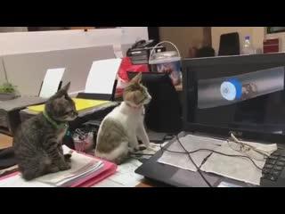 Котята смотрят Том и Джерри