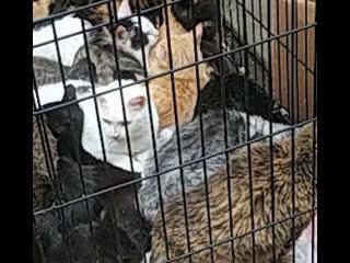 Сотню животных спасли из полыхающего приюта на Кожевенной линии