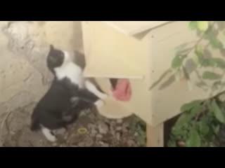 Недовольные жители угрожают уничтожить домик для бездомных котиков в Пушкине