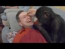 Доделали работу в Тверском цирке Попали под дождь Ко мне пристаёт шимпанзе Мальта