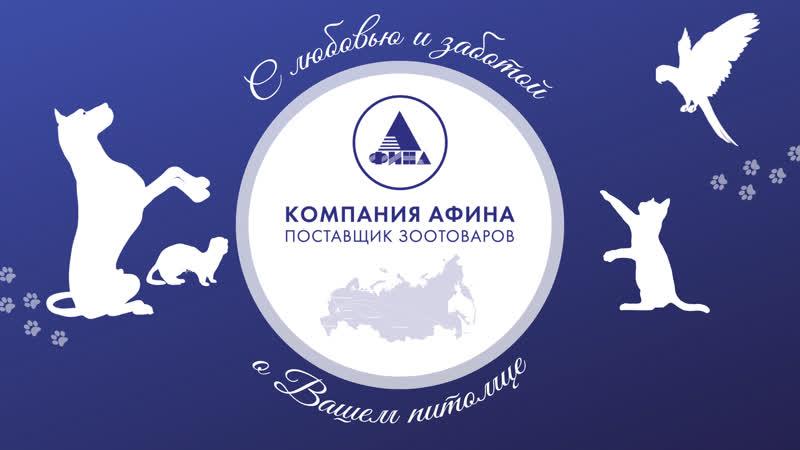 Международная выставка Город собак г Санкт Петербург