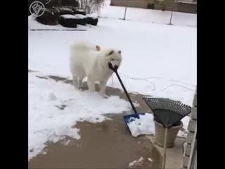 Собаки такие собаки
