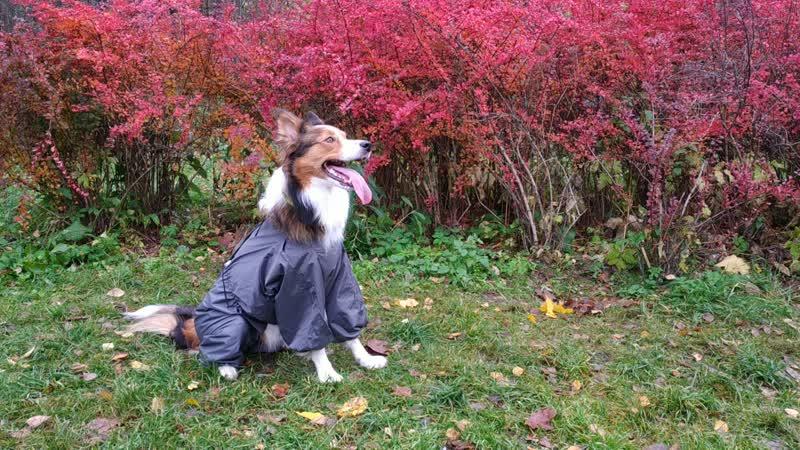 Практичная одежда для собак от ЮТАКС