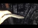 KIA Soul антикор и шумка арок. Блокируем гудящий звук, исходящий от колес (от протектора шин)