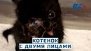 Двуликий кот В США обнаружен котёнок с двумя лицами У него четыре глаза и два рта