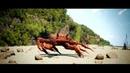 Танцующий краб вставка для видео монтажа crab rave