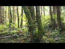 Strange sounds spark search for sasquatch in B C community
