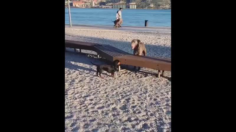 Animals_videoo_B3XdNvhF8RD.mp4