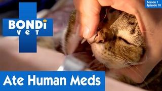 Ветеринар Бондай Бич: Кошка случайно съела человеческое лекарство (1 сезон 10 серия) / Cat Eats Human Medicine Accidentally | S01E10 | Bondi Vet