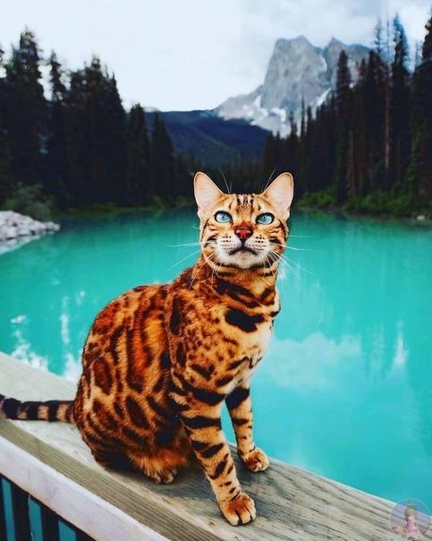 Кот, путешествует со своей хозяйкой по всему миру suiicat