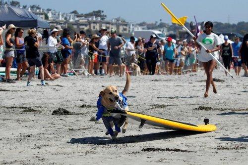 Соревнования по сёрфингу среди собак Top Surf Dog 2019 в Калифорнии