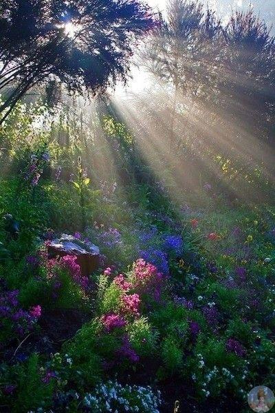 Магия утреннего света