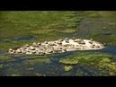 Они живут посреди самого большого болота Африки. Нилоты на болоте Судд