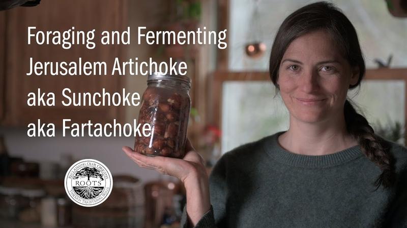 Foraging and Fermenting Jerusalem Artichoke aka Sunchoke aka Fartachoke