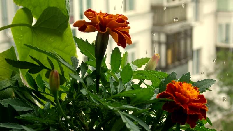 Июньский дождь