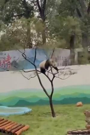 Panda got that