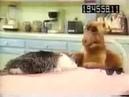 Alf eats cat coub