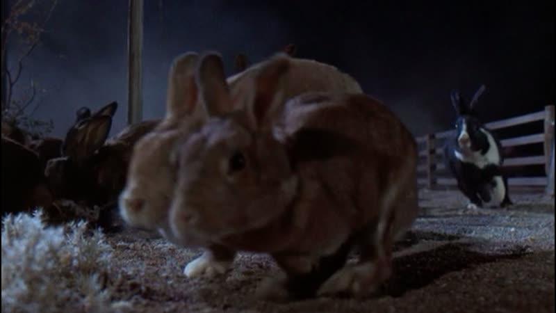 La Noche De Los Conejos