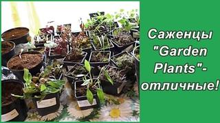 Почему я  выбираю питомник растений Garden plants? Заказ на весну 2021 года и распаковка посылки.