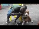 Parece que esse cachorro não gostou muito de ser mil grau