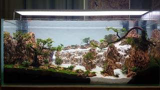 Hồ thủy sinh thác cát núi đá tiger sau 3ngày . Underwater waterfall tank after 3 days