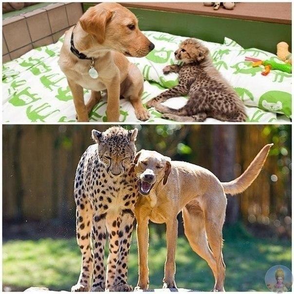 Сказочная дружба.