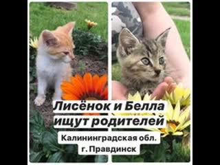 Ищу маму-папу для Лисёнка и Беллы! До 5 августа в Калининграде! Помогите!