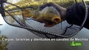 Carpas, tarariras y dientudos en canales de Mechita. 🐟COMO PESCAR 🐟 Leon Pesca