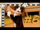 СМЕШНЫЕ КОТЫ Смешное видео про кошек, видео нарезка приколов 2021! выпуск 6