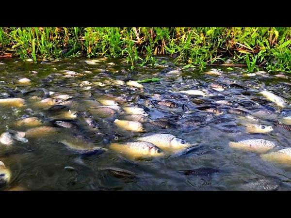 НАШЕЛ ПРОТОКУ А В НЕЙ ТОННЫ РЫБЫ ВОДА КИПИТ рыбалка 2020