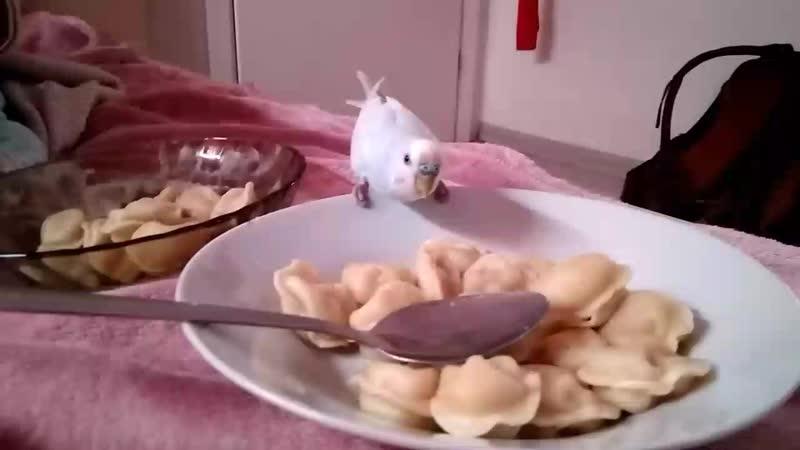 Птенчик ест