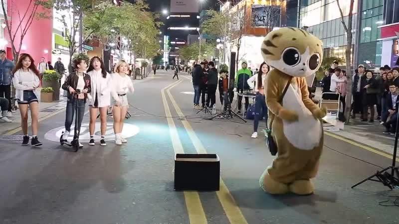 JHKTV 신촌명물고양이댄스 sin chon special cat k pop dance dance