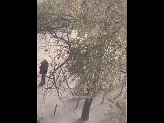 В Харькове ветеран АТО закинул гранату  в квартиру бывшей жены, приревновав её к новому ухажеру.