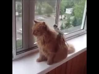 Очень терпеливый котейка.. - ..