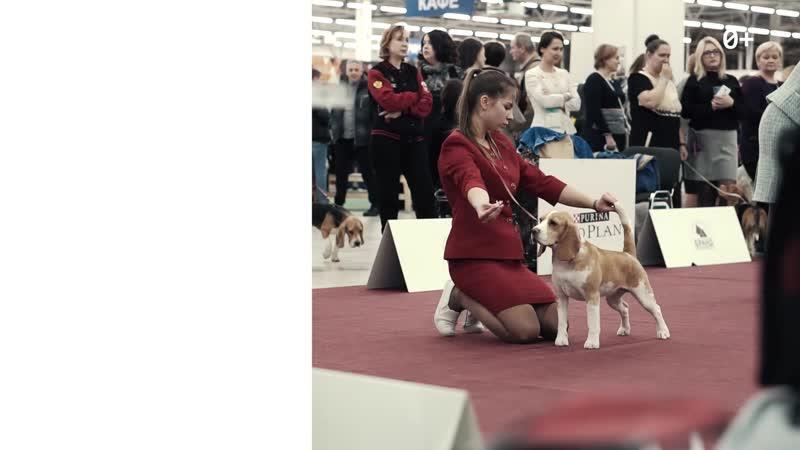 Международная выставка собак — 2020