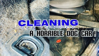 My dirtiest car of 2020! Cleaning and detailing a dog handlers filthy Ford Mondeo / Fusion