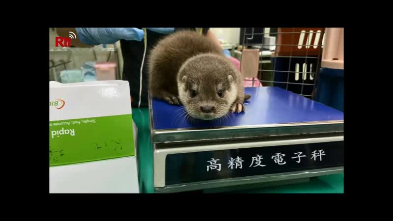 В восточной части Тайваня откроют Центр спасения диких животных