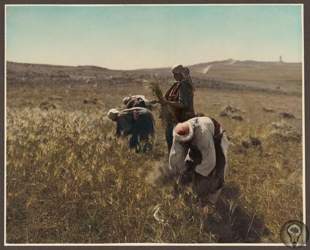 Цветные фото Палестины, 1919 г