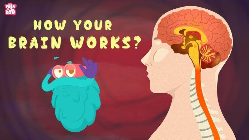 How Your Brain Works? - The Dr. Binocs Show | Best Learning Videos For Kids | Peekaboo Kidz