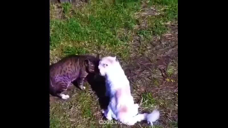 Коты матерятся