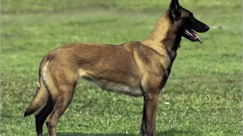 Evil dogs كلب شرير