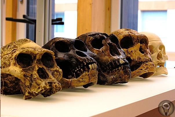Найден самый древний Homo Sapiens в Европе. Ему больше 45 тысяч лет!