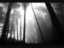 Darkness 43 Lé Travo Chiaroscuro