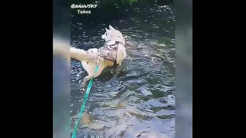 Батый и Тайна в реке Скнига