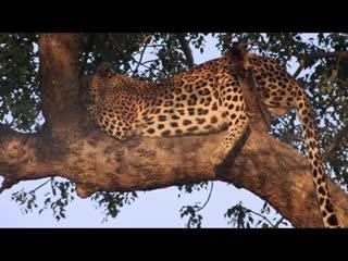 Африканское Сафари ⁄ African Safari (2013)